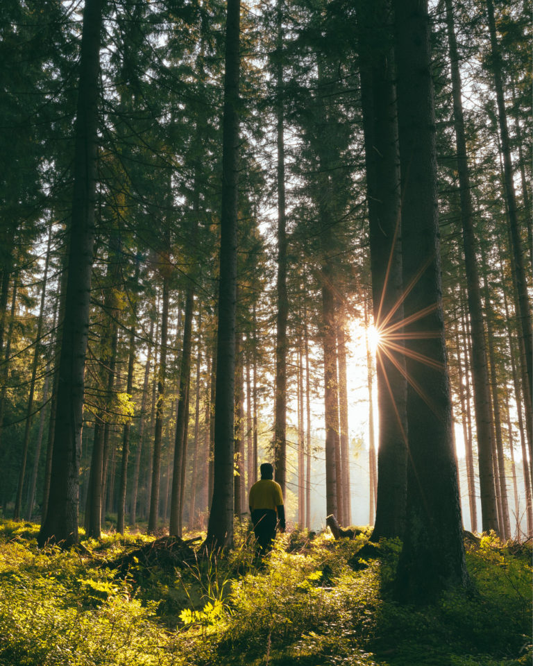 Nature Photography of deep forest and high contrast sunlight