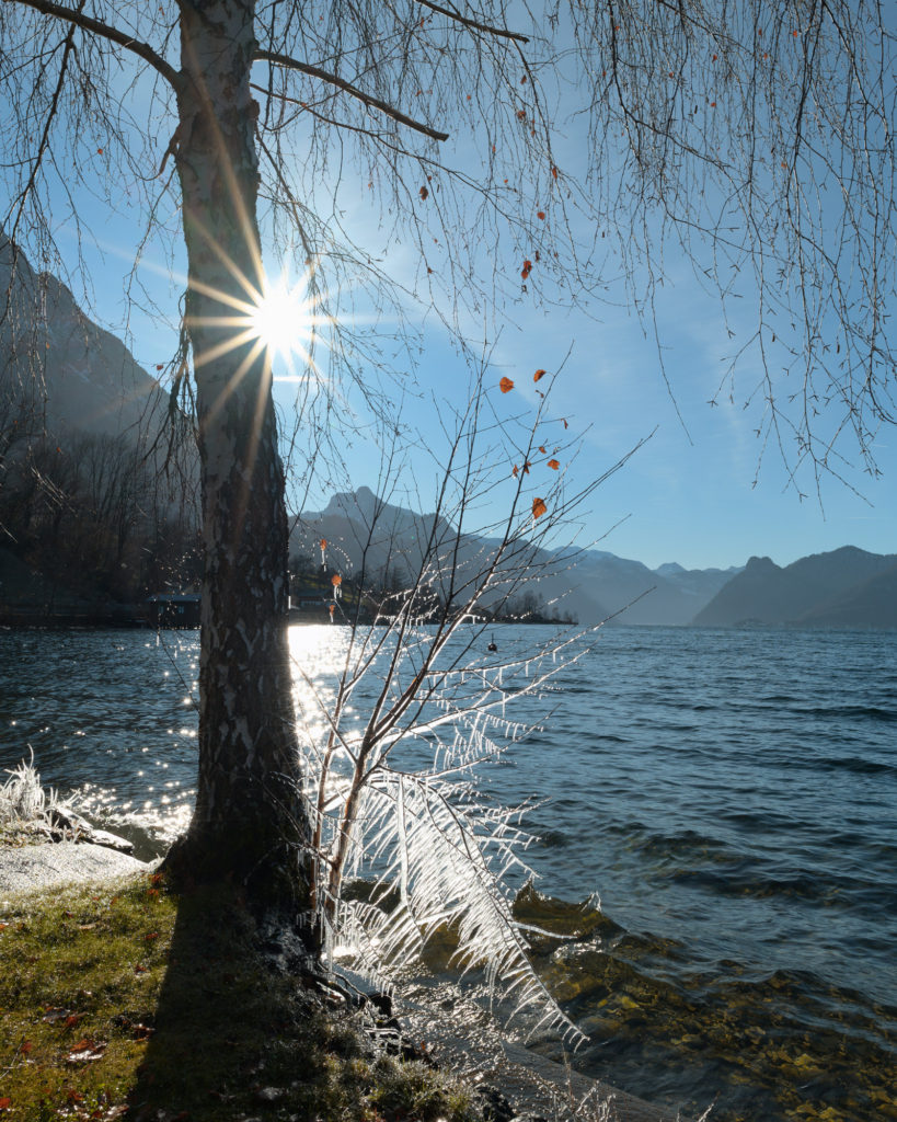 Landscape view of Traunsee Lake and tree covered in ice during Winter